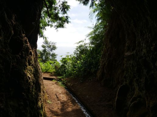 The view from a levada