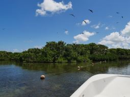 The Frigate bird sanctuary in the big lagoon